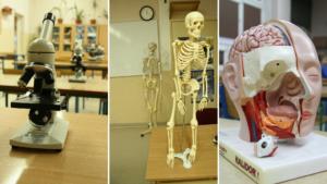 Pracownia biologiczna: widoczne są mikroskopy, modele szkieletu człowieka oraz przekrój modelu ludzkiej głowy.